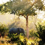 Savanni kutsuu – 10+1 vinkkiä elämäsi safarille
