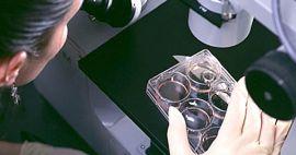 Laboratorio de investigación de células madre diseño y equipamiento