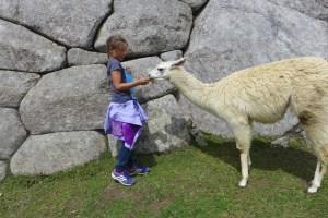 Mackenzie feeding a llama