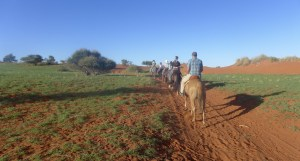 Mackenzie, Quinn, and Jacob riding horses in a line surrounded by red sand and green desert trees