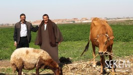 SEKEM Contracted Farmers