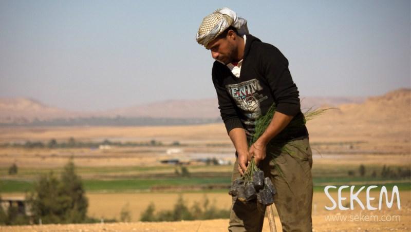 Planting trees on SEKEMs farm in Egypt's western desert