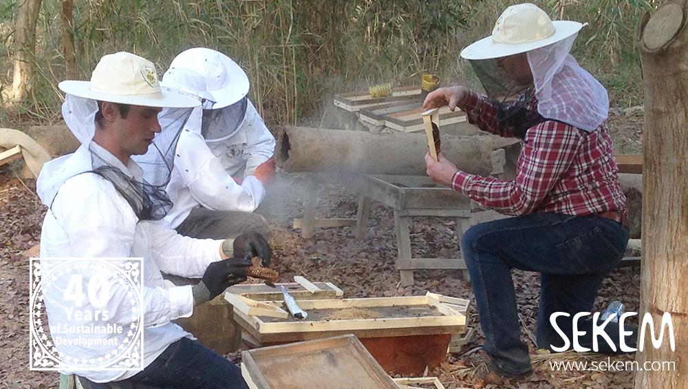 Ägyptische Bienen vor dem Aussterben retten