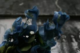 Venedig Blumen Ausw06