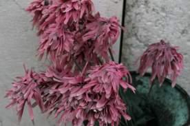 Venedig Blumen Ausw16