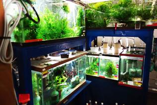 select aquatics