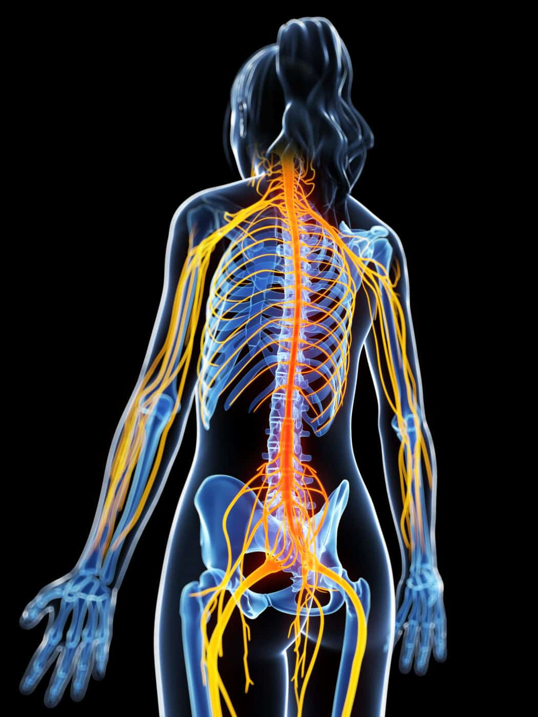 Best Whole Body Foods Nervous System Bones Muscles