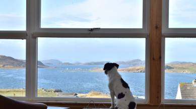 Windyhill View perfect for a Terrier
