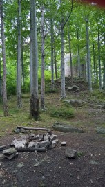 Beech forest at Kaltenstein