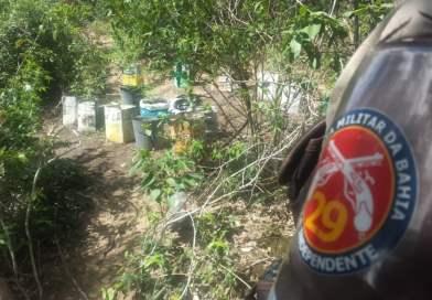 Plantação de maconha é descoberta em Seabra