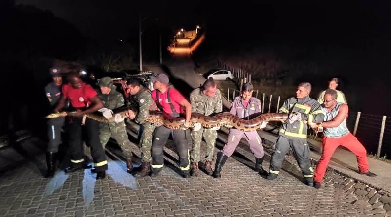 Corpo de Bombeiros resgata cobra de 7 metros em Porto Seguro