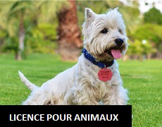 Licence pour animaux