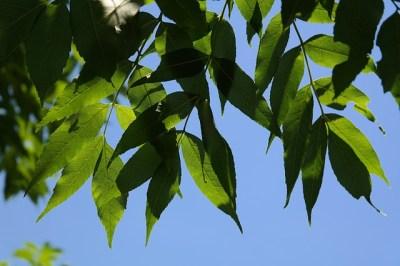 leaves-141567_640