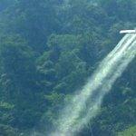 Persisten las fumigaciones en Putumayo