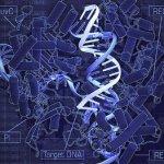 China: Logran modificar el ADN de embriones humanos