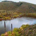 Descontaminación del río Bogotá cuesta tanto como el metro