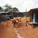 El campo colombiano entre el latifundio y la miseria