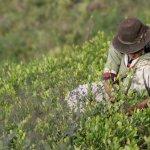 """Bolivia dice EE.UU. carece de """"solvencia moral"""" para juzgar la lucha antidrogas"""