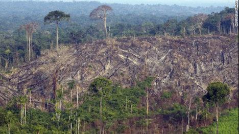 La depredación del bosque tropical afecta el equilibrio de la naturaleza. Foto Archivo.