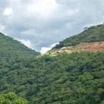 Bosque sin árboles, sin río y sin gente