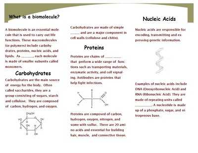 Biological Molecules Worksheet or Biological Worksheet Fabulous What are some Findings In Biological