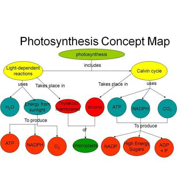 Biomolecules Concept Map Worksheet Also Easy Method for Making A Synthesis Concept Map with Example