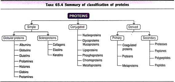 Biomolecules Concept Map Worksheet with Biomolecules top 4 Classes Of Biomolecules