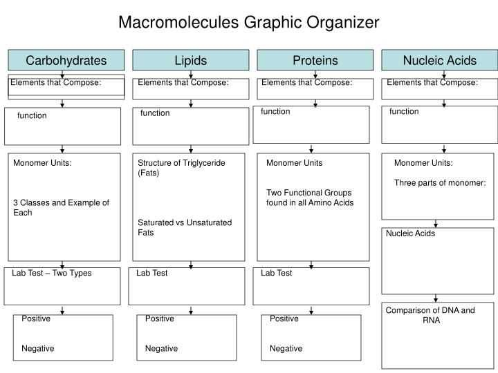 Biomolecules Worksheet Answers together with 622 Best Biology Images On Pinterest