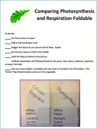 Bozeman Biology Photosynthesis and Respiration Video Worksheet Answers together with Synthesis and Respiration Worksheet Answers