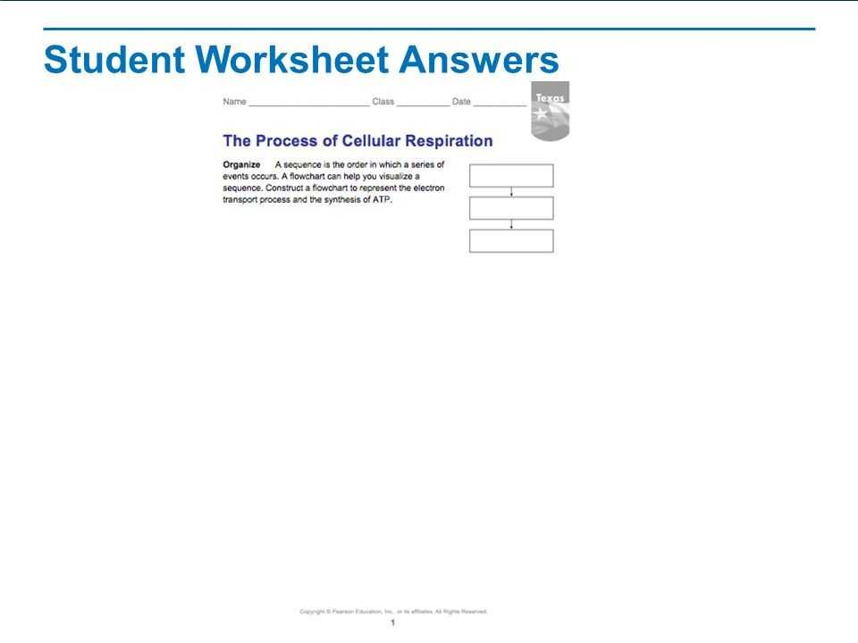 Bozeman Biology Photosynthesis and Respiration Video Worksheet Answers with 19 Inspirational Cellular Respiration Worksheet Answers