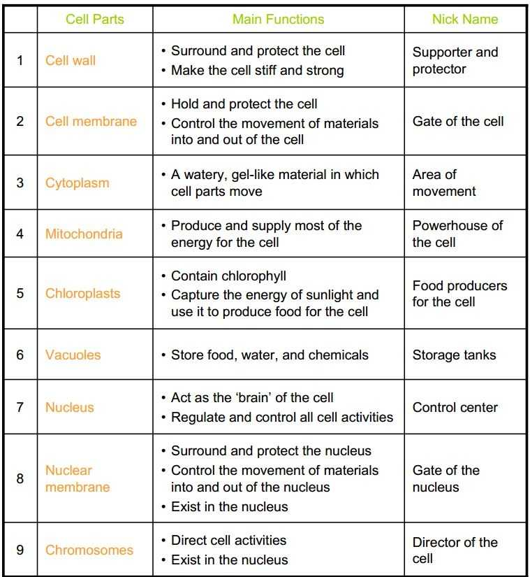Cell Activity Worksheet and Unique Cell organelles Worksheet New 9 Best Recipes to Try