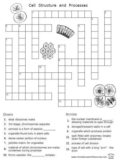 Cell Activity Worksheet together with 107 Best Cells Images On Pinterest