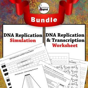 Cell Cycle and Dna Replication Practice Worksheet Key and Dna Replication Modeling Teaching Resources