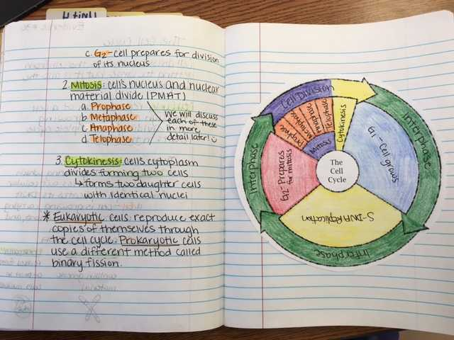 Cell Cycle Coloring Worksheet or Worksheets 42 Re Mendations the Cell Cycle Worksheet Hi Res