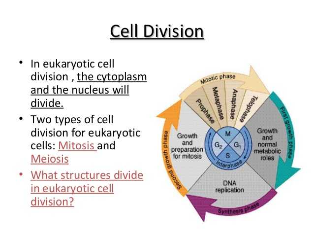 Cell Division and Mitosis Worksheet Answer Key Also Biology Cell Transport and Cell Cycle 12 06 12 Thursday
