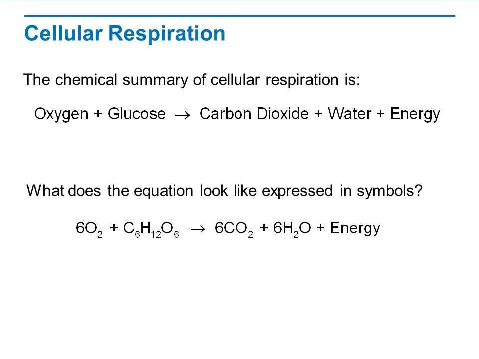 Cellular Respiration Breaking Down Energy Worksheet Answers or 19 Inspirational Cellular Respiration Worksheet Answers