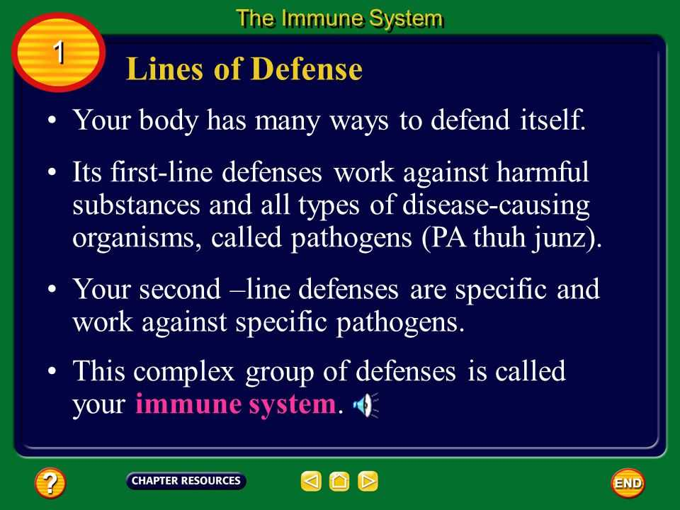Chapter 24 the Immune System and Disease Worksheet Answer Key or Chapter Immunity and Disease Table Of Contents Section 3