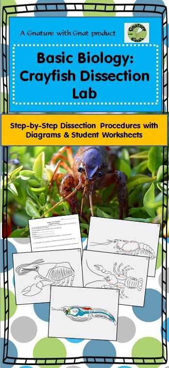 Crayfish Dissection Worksheet as Well as 22 Best Dissection Images On Pinterest