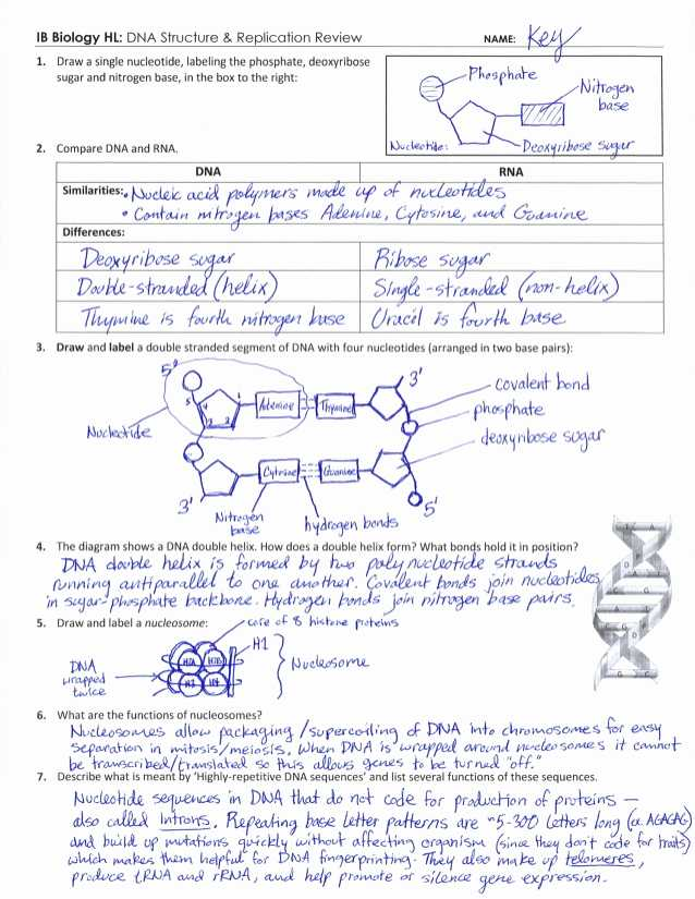 Dna Mutations Practice Worksheet Answers or 43 Dna Mutations Practice Worksheet Answers Fresh