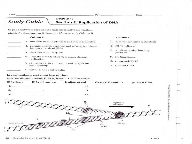 Dna Replication Worksheet Answer Key with Dna Replication Worksheet Worksheets for All