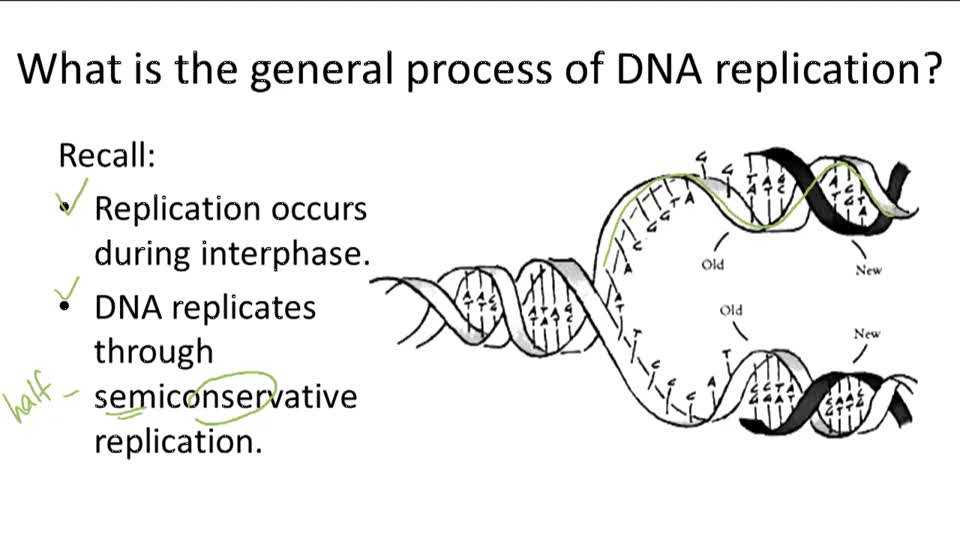 Dna Structure and Replication Review Worksheet as Well as Dna Structure and Replication