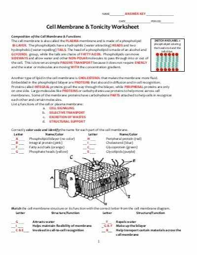 Dna Structure and Replication Review Worksheet with Lovely Dna Replication Worksheet Answers Elegant Dna Structure and