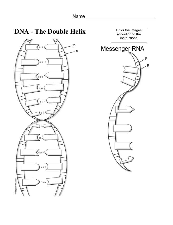 """Dna the Double Helix Worksheet Also Dna Coloring Worksheet & 630 X 878 """"""""sc"""" 1""""st"""" """"alabiasafo"""