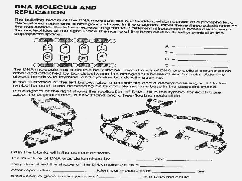 Dna the Double Helix Worksheet with Worksheets 44 Inspirational Dna the Molecule Heredity Worksheet