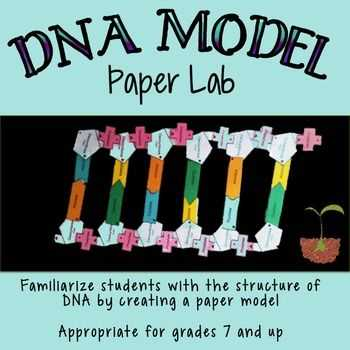 Dna Worksheet Answers with Dna Structure Lab Paper Model