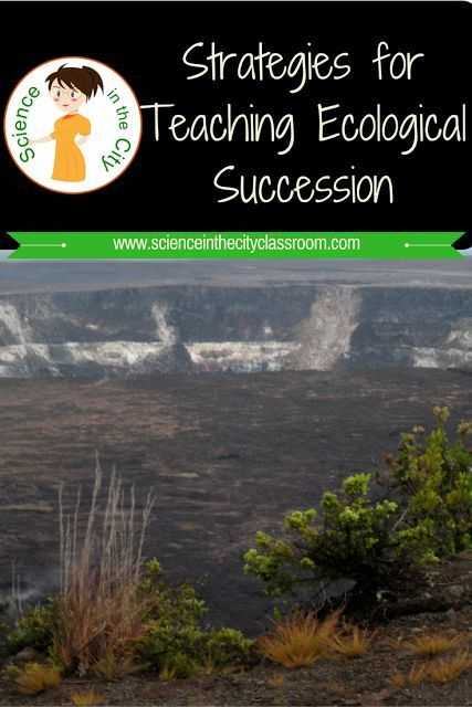 Ecological Relationships Worksheet and How to Use the 5e S for Prehension Of Ecological Succession