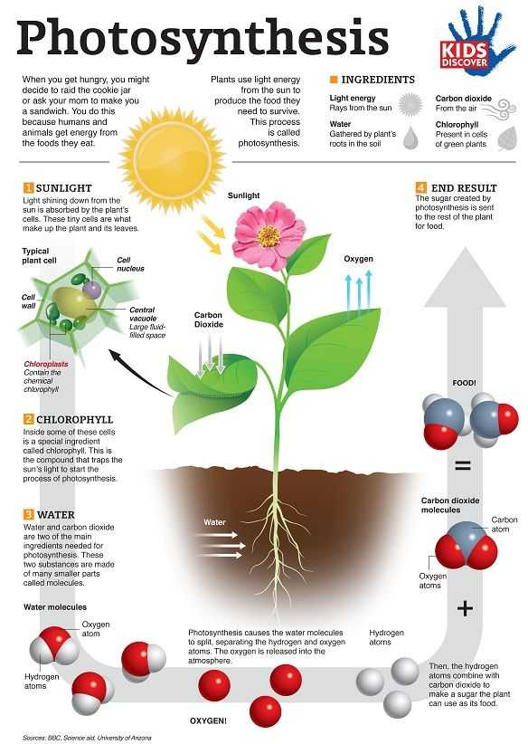 Effects Of Co2 On Plants Worksheet Answers Also 169 Best Cell Processes Images On Pinterest