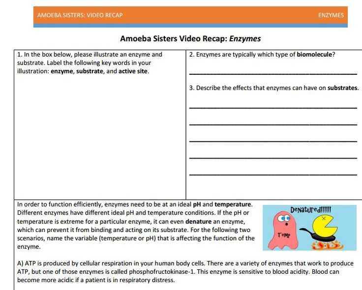 Enzymes Worksheet Answer Key Along with 27 Best Amoeba Sisters Handouts Images On Pinterest