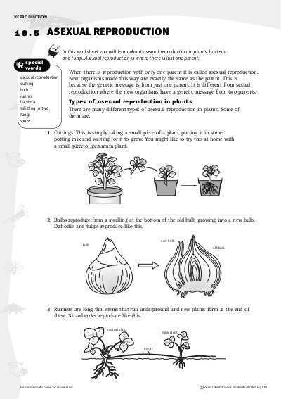 Flower Anatomy Worksheet Key with Worksheet A Ual Reproduction