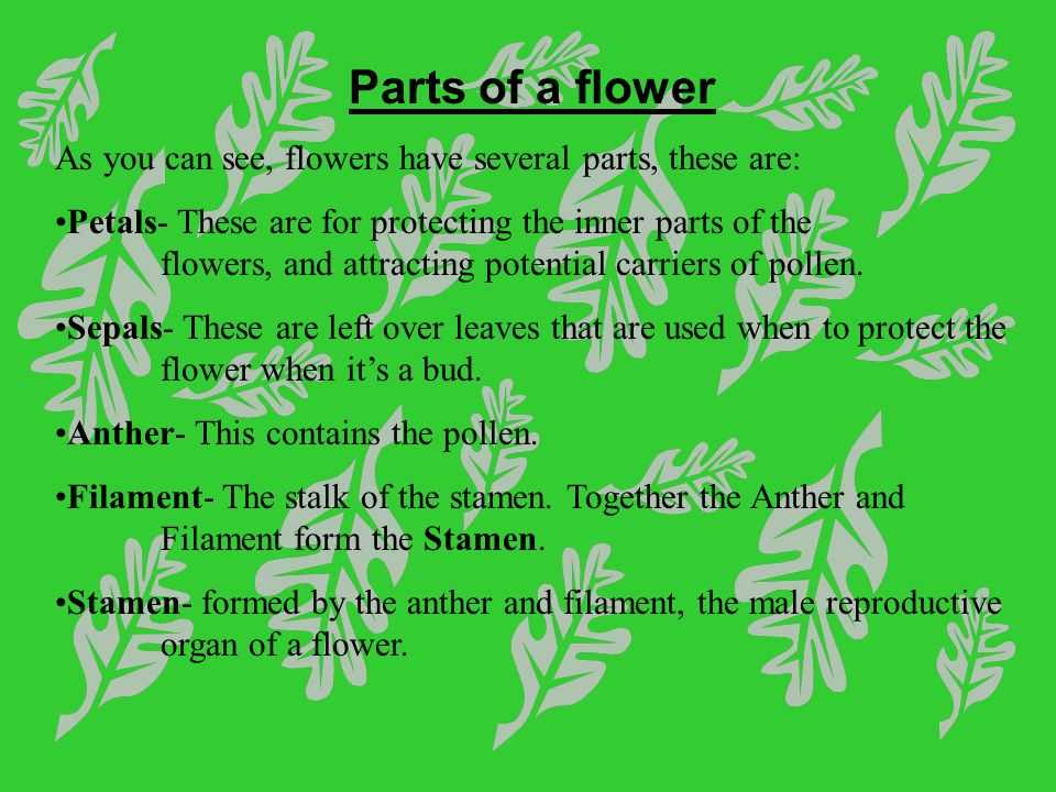 Flower Structure and Reproduction Worksheet Answers as Well as Flowers and Plant Reproduction Line Lesson 1 Watch This First and